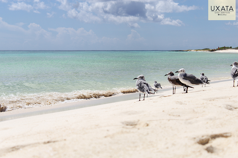 Bird at the beach, white sand and caribbean sea, Soliman Bay, Cooking Classes in Riviera Maya