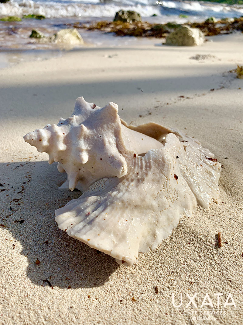 A conch shell on the white sand beach of Akumal Bay, with the Caribbean sea in the background, by UXATA Personal Chef Services
