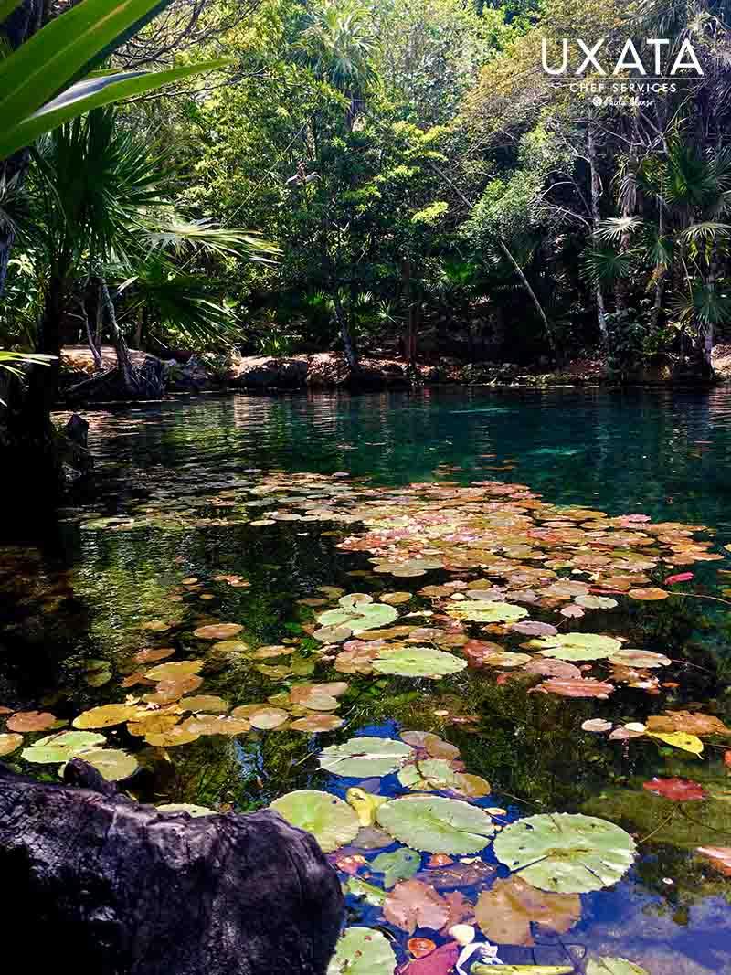 Water lilies in Cenote Tankah, Riviera Maya.