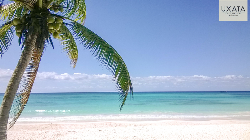 A coconut tree, white caribbean sand and turquoise waters in Soliman Bay, Riviera Maya